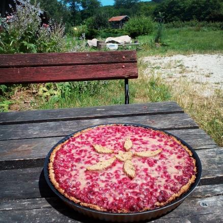 Ribizlis pite